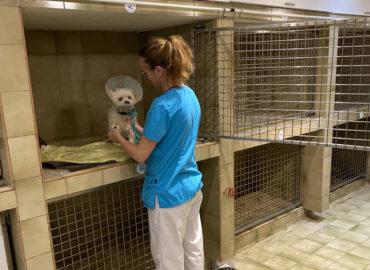 hospitalisation clinique vétérinaire stalingrad